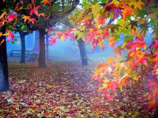 Обои на телефон сад, цветные, осень, autumn in garden