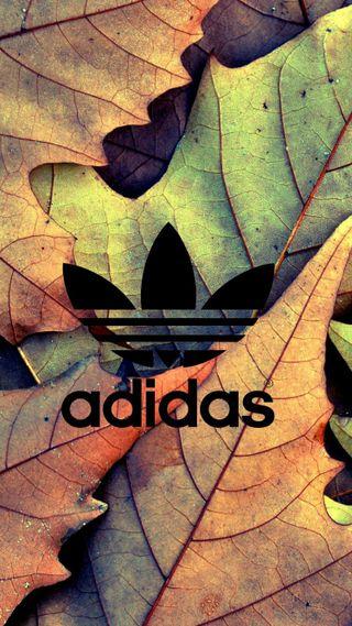 Обои на телефон осень, логотипы, листья, адидас, adidas