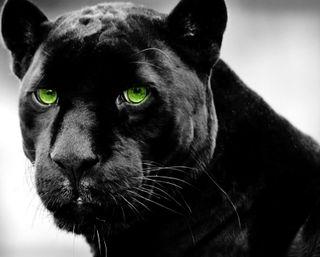 Обои на телефон черные, темные, пантера, кошки, зеленые, животные, дикий, глаза, green eyes