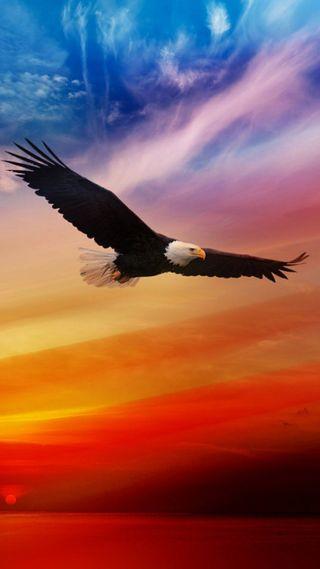 Обои на телефон летать, птицы, природа, орел, небо, король, животные, king of the sky