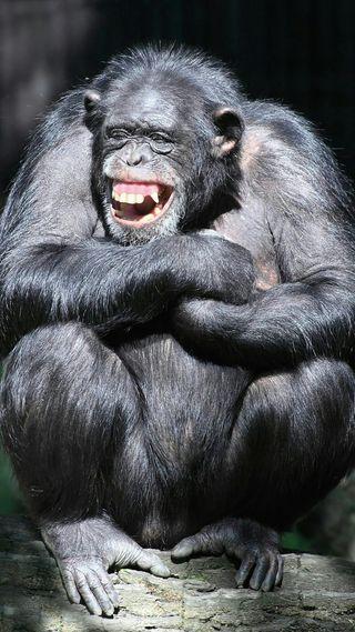 Обои на телефон scimpanze allegro, icio, chimpanzee