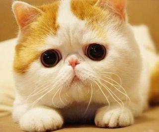 Обои на телефон снупи, милые, любовь, кошки, котята, snoopy cat, love