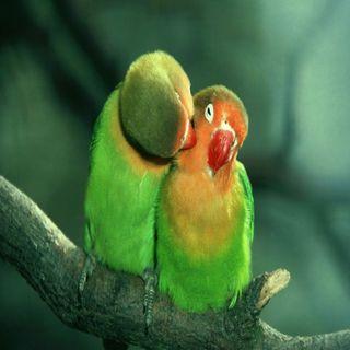 Обои на телефон прекрасные, попугаи, животные