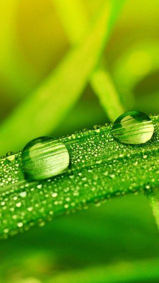 Обои на телефон капли дождя, трава, капли воды, капли, зеленые