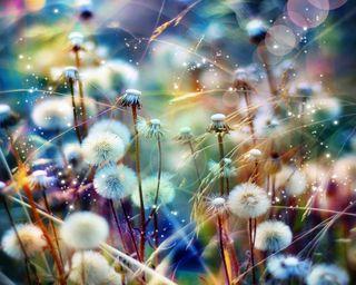 Обои на телефон пожелание, цветные, поле, пожелания, красочные, dandelions, colorful wishes