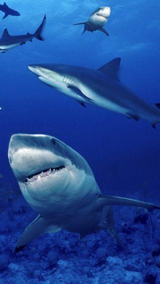 Обои на телефон blue water, sharks fish, синие, вода, рыба, подводные, акула