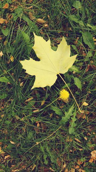 Обои на телефон трава, природа, осень, одуванчик, листья, зеленые, желтые, айфон, iphone 5 autumn leaf