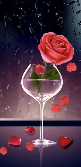 Обои на телефон девчачие, стекло, симпатичные, романтика, розы, розовые, прекрасные, дождь, roseinglass, pettels