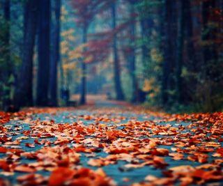 Обои на телефон парк, осень, листья, дорога, деревья
