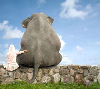 Обои на телефон слон, лучшие, животные, друг, возлюбленные, animal friend 4ever