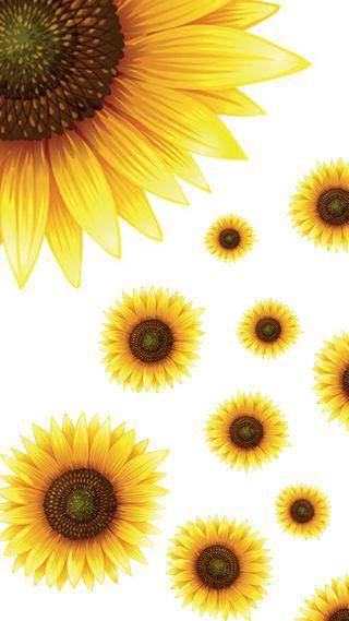 Обои на телефон подсолнухи, цветы, желтые, белые, reprint