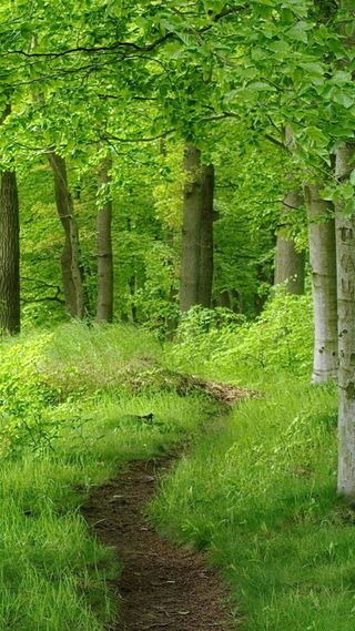 Обои на телефон джунгли, прекрасные, лес, зеленые