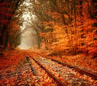 Обои на телефон спокойные, осень, оранжевые, листья, железная дорога, деревья