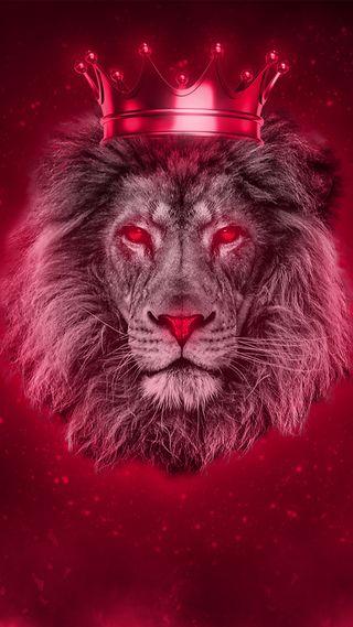 Обои на телефон дикие, лицо, лев, красые, корона, король, животные, голова