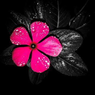 Обои на телефон дождь, цветы, flo
