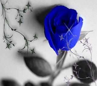 Обои на телефон тюльпаны, цветы, синие, приятные, природа, крутые, красота, дизайн