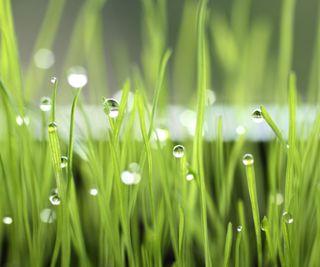 Обои на телефон макро, трава, природа, капли, зеленые, вода