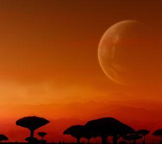 Обои на телефон силуэт, тень, небо, луна, закат, дерево
