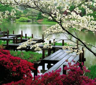 Обои на телефон японские, цветы, парк, озеро, flower park
