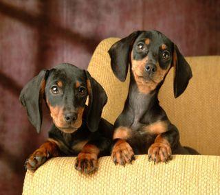 Обои на телефон питомцы, щенки, собаки
