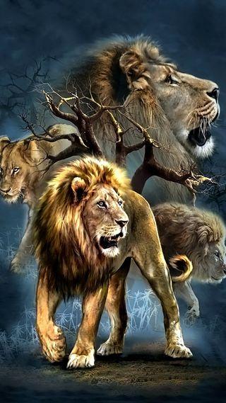 Обои на телефон лев, land