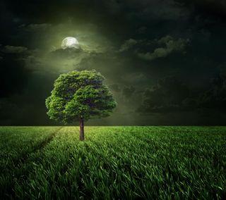 Обои на телефон трава, поле, ночь, луна, дерево