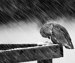 Обои на телефон холод, снег, птицы, природа, погода, зима, животные, дождь, ветер, winter bird, winter animal