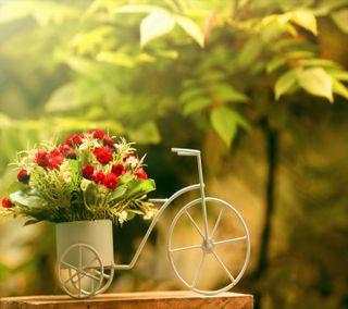 Обои на телефон цветы, прекрасные, милые