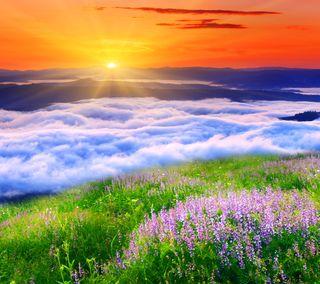 Обои на телефон облачно, цветы, природа, прекрасные, поле, закат, горы