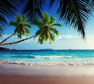 Обои на телефон берег, тропические, природа, пляж, пальмы, море, листья, волна