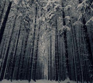 Обои на телефон холод, темные, снег, лес, зима, деревья, дерево, вид, winter forest view