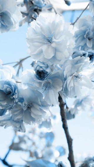 Обои на телефон цветы, приятные, прекрасные, галактика, note3, galaxy, beautiful flower