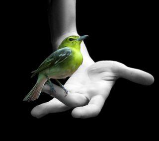 Обои на телефон рука, рокки, птицы, приятные, природа, новый, милые, любовь, крутые, воробей, love, bird in hand hd, 2012