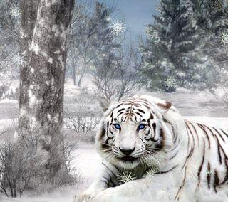 Обои на телефон тигр, белые