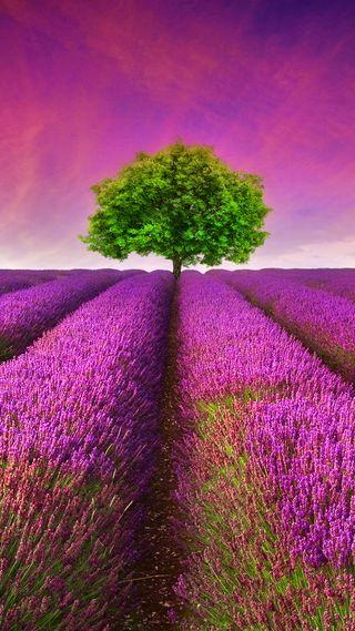 Обои на телефон франция, цветы, природа, поле, пейзаж, лаванда, provence