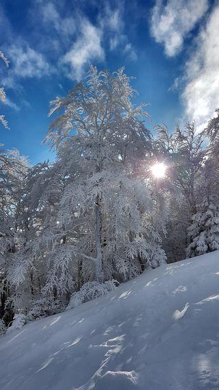 Обои на телефон холод, холодное, солнце, снег, синие, небо, зима, дерево, frozen tree