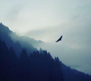 Обои на телефон свобода, птицы, орел, летать, крылья, ветер