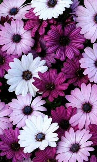 Обои на телефон природа, крутые, милые, цветы, фиолетовые, красота, симпатичные, прекрасные