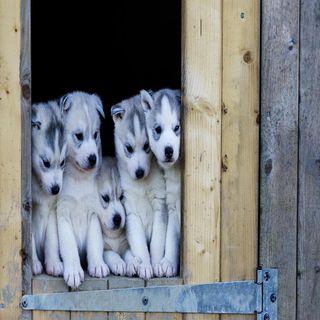 Обои на телефон щенки, приятные, прекрасные, милые, взгляд