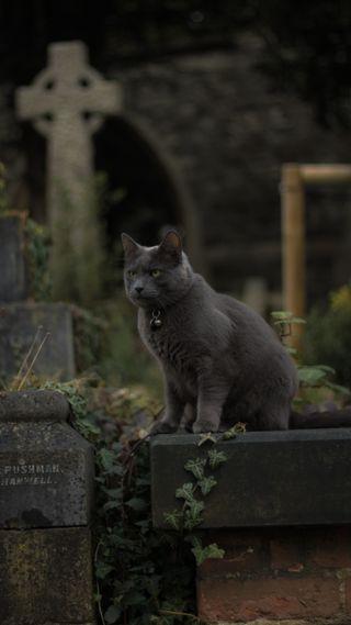Обои на телефон ужасные, хэллоуин, ужасы, страшные, кошки, zedgehallow18, cat in graveyard