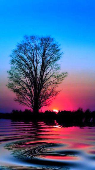Обои на телефон дерево, закат, вода, sunset hd, reflecting