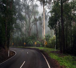 Обои на телефон растения, путь, природа, лес, дорога, дерево, nature qhd