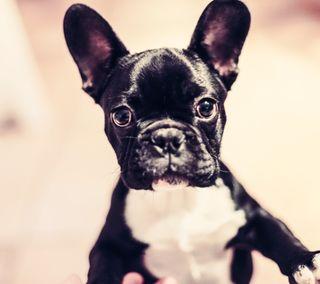 Обои на телефон питомцы, собаки, приятные, новый, милые, cute dog