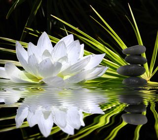Обои на телефон лотус, цветы, xa, lotus flower