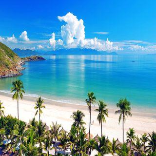 Обои на телефон взгляд, приятные, природа, прекрасные, пальмы, милые, palm nature