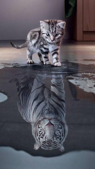 Обои на телефон отражение, тигр