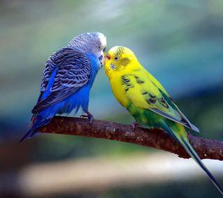 Обои на телефон поцелуй, lovebirds