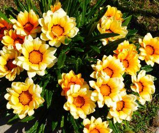 Обои на телефон маргаритка, цветы, природа, лето, желтые, весна, yellow spring flower