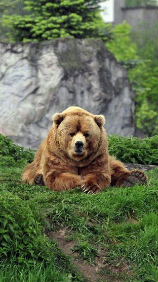 Обои на телефон медведь, коричневые, животные, дикие, grumpy bear
