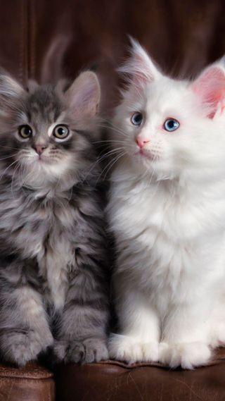 Обои на телефон кошки, котята